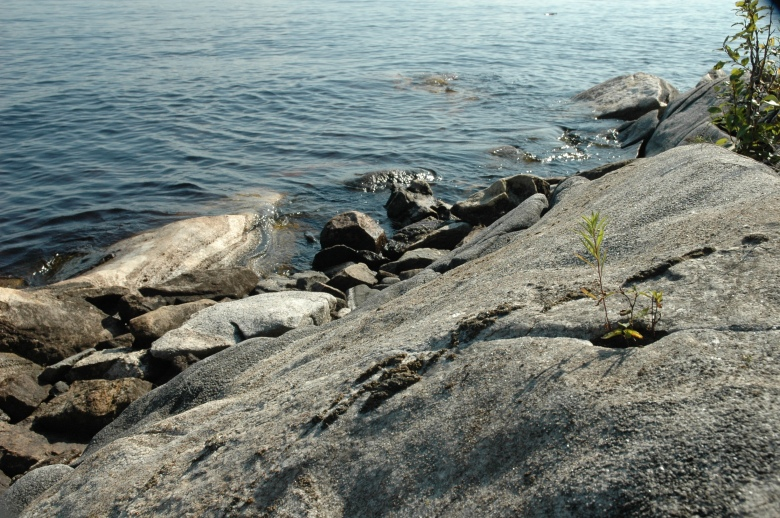 'Life of the rocks' (as opposed to 'The Madonna of the rocks'...)